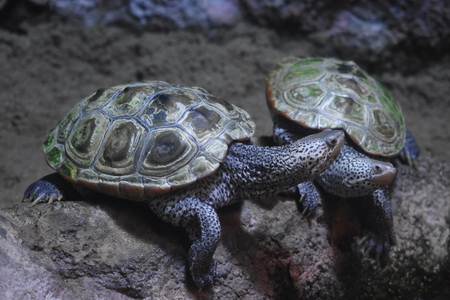 Wild Turtles Or Tortoises