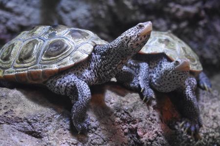 Wild Turtles Or Tortoises Closeup