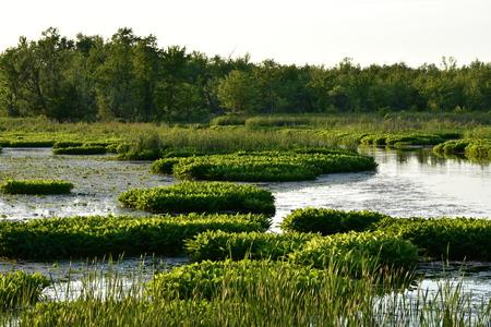 Marshy Swamp Water And Trees Фото со стока