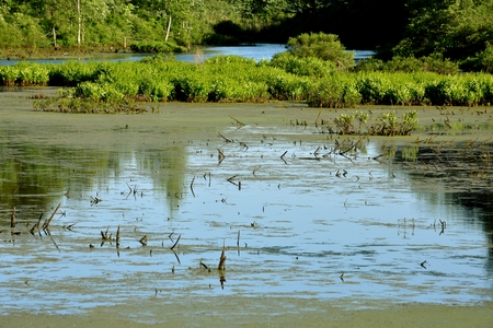 Dirty Polluted Water Swampy Marsh