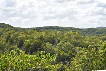 A Hilly View With Forest Trees