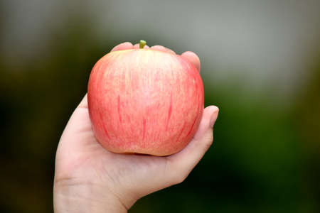 A Hand Holding An Apple 写真素材
