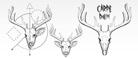 Hand Drawn, deer skull, and face silhouette. Vintage deer head vector illustration, scratchboard, engraving, black ink, line art drawing style with geometric shapes and Carpe Diem slogan Çizim