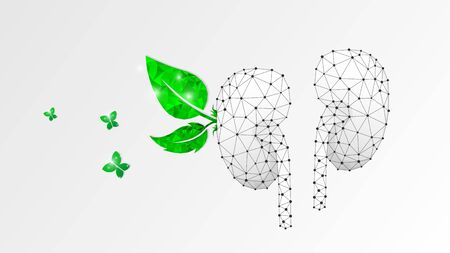Healthy Kidneys, human organ with green leaves and butterfly. Adult body anatomy, health biology. Low poly, wireframe 3d vector illustration. Abstract polygonal image on white origami background