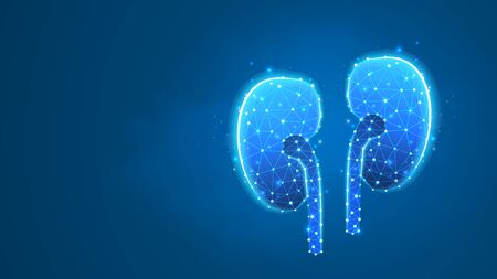 Human kidneys. Adult body anatomy, health biology, internal world of people. Low poly, wireframe 3d vector illustration. Abstract polygonal image on blue neon background