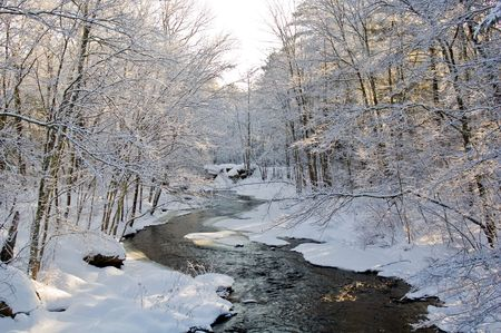 pine creek: A snow covered creek meanders through a pine forest shortly after a snowfall, with morning light.