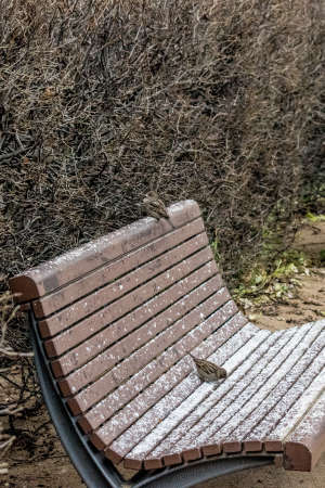 tragos: Golondrinas en un banco del parque