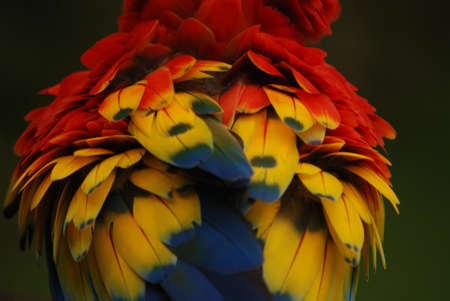 Macaw Plumage Stock Photo - 13196753