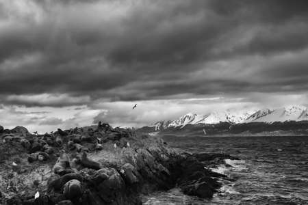 blanck: Wild life of the beagle channel Stock Photo