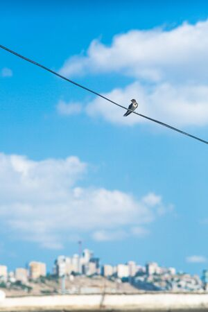Swallow sitting on electric wire with city view.