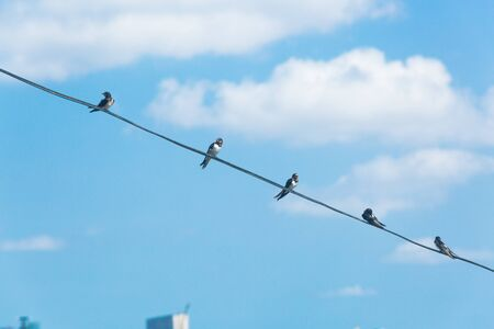 Swallow sitting on electric wire with city view. Wildlife concept, environmental problem. Stockfoto