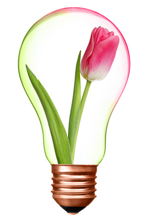 conservation: Flower in bulb with bronze base as a symbol of environment protection