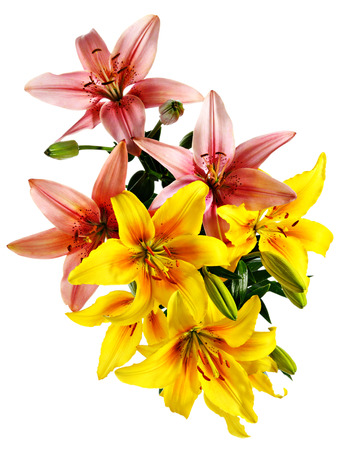Flowers pattern. Pink and yellow-orange lilies isolated on white
