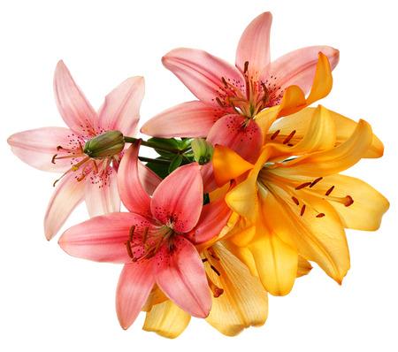 arreglo floral: Modelo de flores. Lirios de color rosa y naranja aislados en blanco Foto de archivo