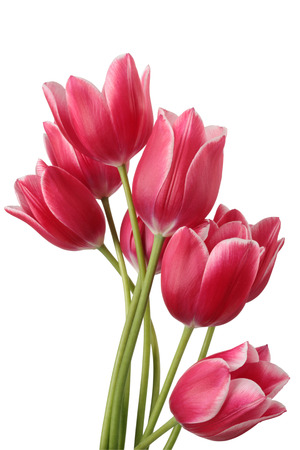 loveliness: Bouquet of tulip on a white background. Clipping path