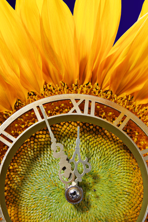 horologe: Sunflower with clock