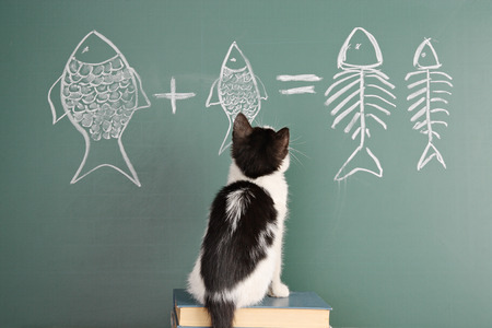 Joke about a cat studying arithmetic Stock Photo
