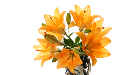 lemony: Lily in vase on a white background