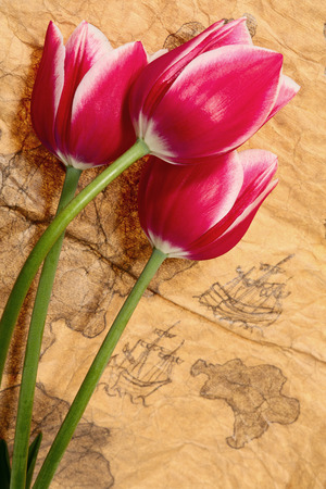 expansion card: Travel of tulips worldwide