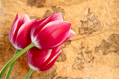 expansion card: Expansion of tulips worldwide