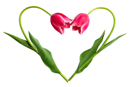 The form of heart from two tulips