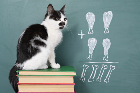 School idea, joke about a educated cat studying arithmetic Stock Photo