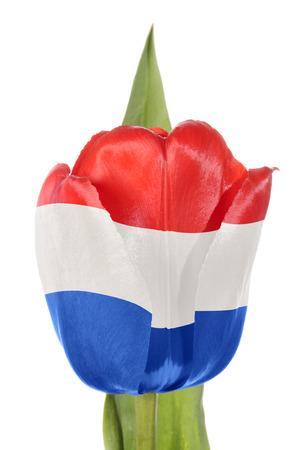 drapeau hollande: Hollande drapeau de l'ordre de fleur. Isol� sur un fond blanc Banque d'images