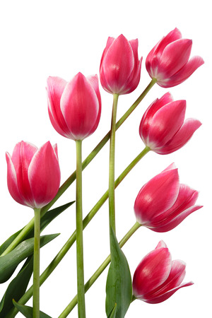 Seven tulips built in trellised structure photo