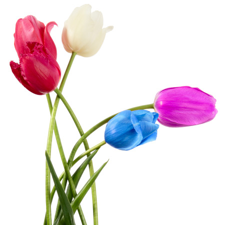 Varicolored flowers isolated on a white background photo