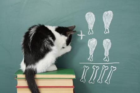 Education idea, joke about a  impudent cat studying arithmetic Standard-Bild
