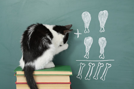 funny animals: Education idea, joke about a  impudent cat studying arithmetic Stock Photo