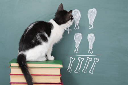 fun background: School idea, joke about a educated cat studying arithmetic Stock Photo