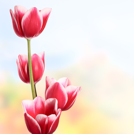 blured: Beautiful flowers on the blured color background Stock Photo