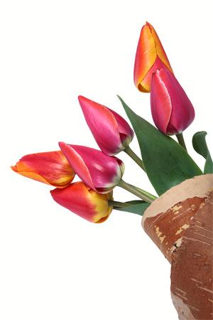 birchen: Tulips in envelope from cork birchen on a white background. Clipping path