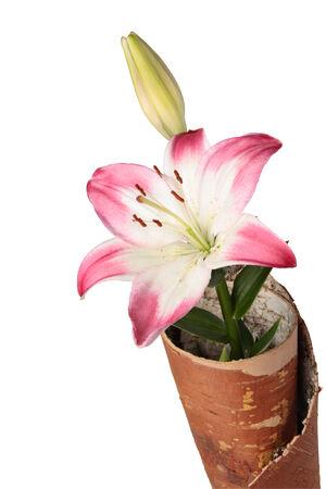 birchen: Lily in envelope from cork birchen on a white background. Clipping path