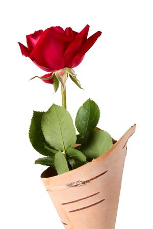 birchen: Rose in envelope from cork birchen on a white background. Clipping path Stock Photo