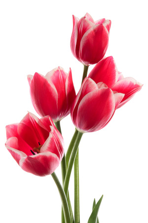 Beautiful bouquet of tulips on a white background Banco de Imagens