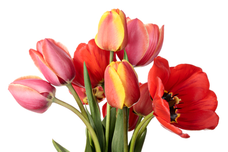 goodly: Tulips. Goodly bouquet of flowers isolated on a white background