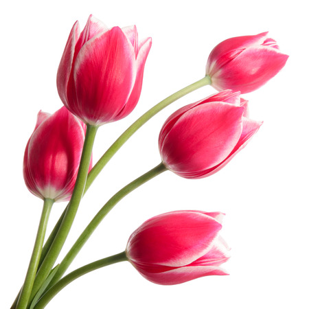 Bouquet of tulips on white background Imagens - 32985621