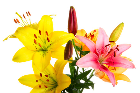 lemony: Salute from multi-coloured lilies on a white background Stock Photo