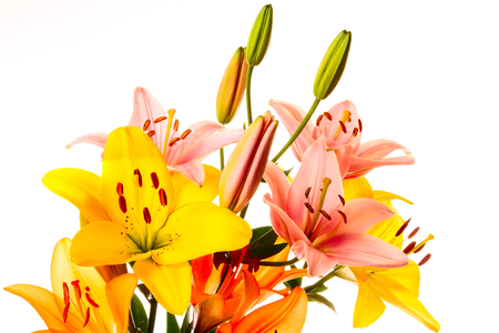 Beautiful bouquet of lilies on a white background photo
