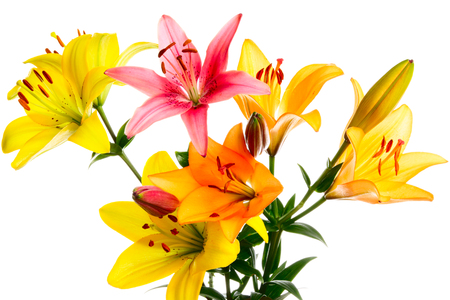 lemony: Bouquet of lilies on a white background