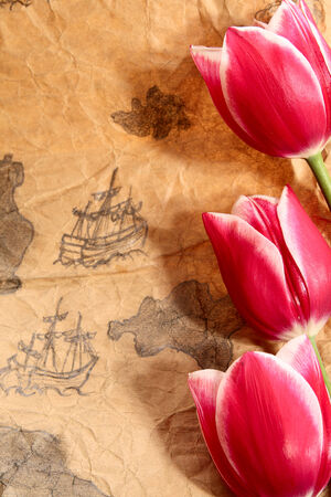 expansion card: Three tulips on old marine map