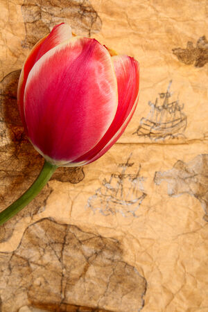 expansion card: Tulip on old marine map Stock Photo