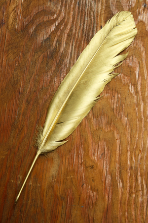 Gold quill pen on wood background Stock Photo