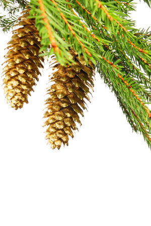 ramification: Branch of spruce with golden cones Stock Photo