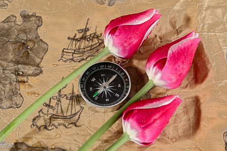 battered land: Old dingy chart, compass and tulips