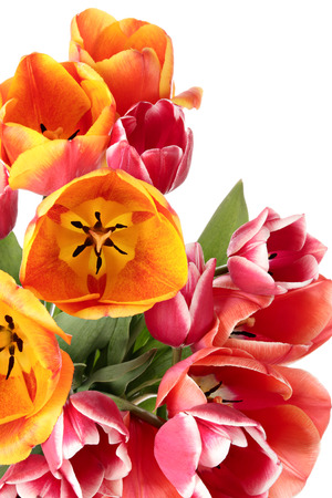 goodly: Tulips. Bouquet of flowers isolated on a white background