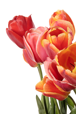 goodly: Bouquet of tulip flowers isolated on a white background