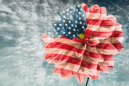 Flower of dahlia as flag of USA on the order of olden time card photo